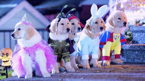 Spooky Buddies - der Fluch des Hallowuff-Hunds |