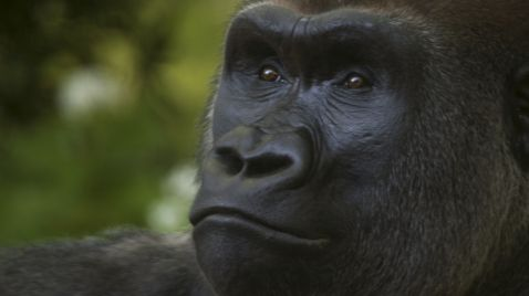 Bronx Zoo - Tierpark der Superlative |