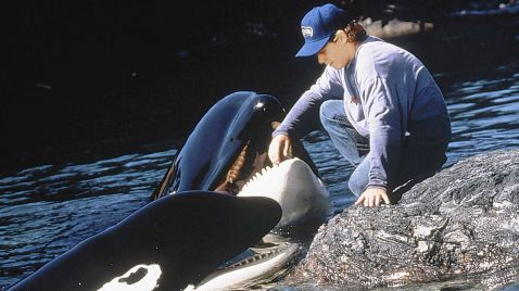 Free Willy 2 - Freiheit in Gefahr |